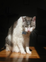 Wet_cat